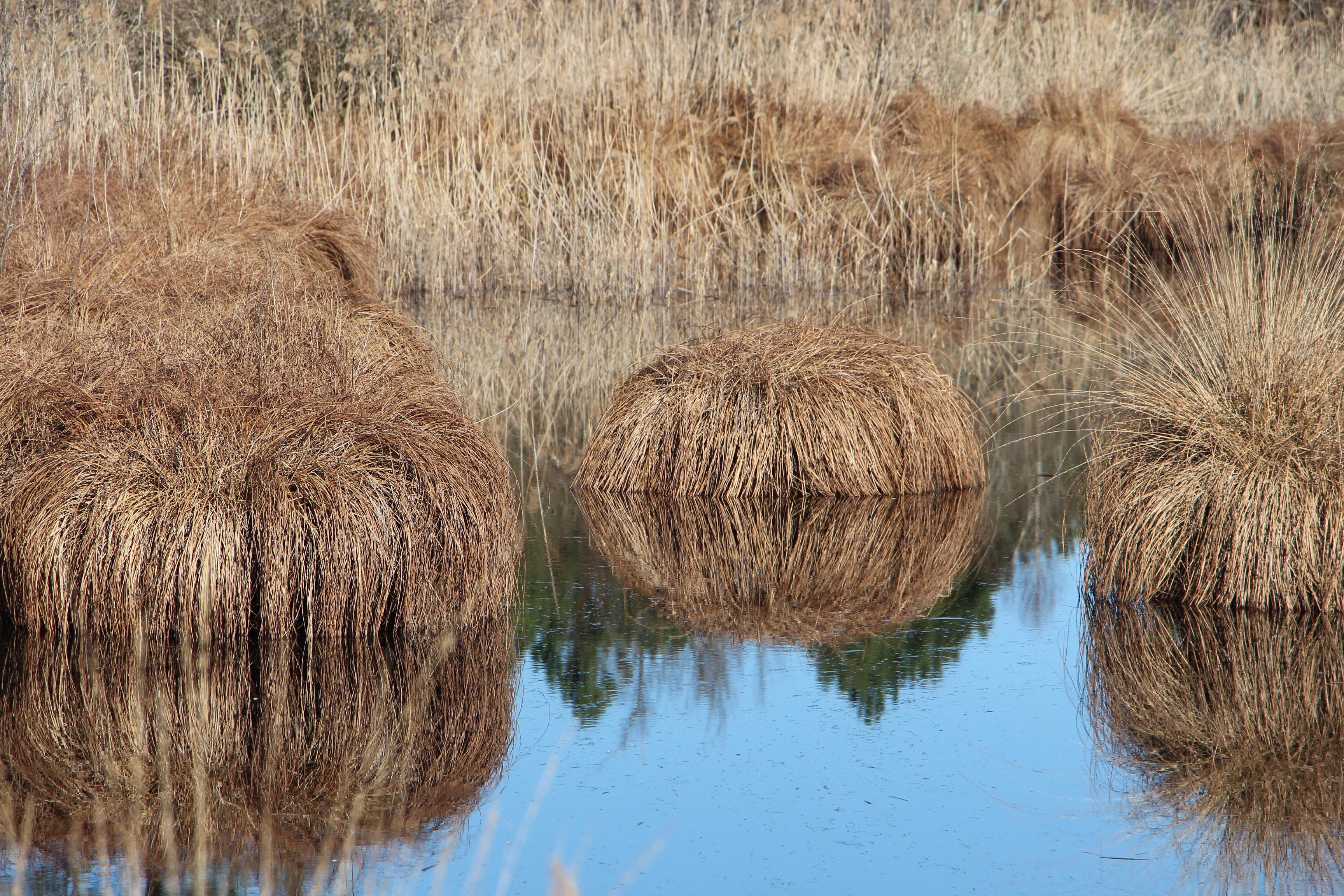 Louchats Lagunes du Gat Mort