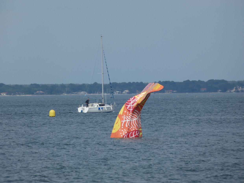 Baleine Arcachon
