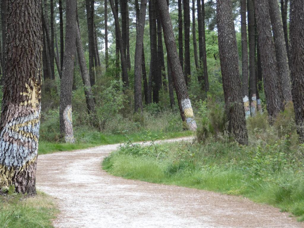 Forêt de Migelane